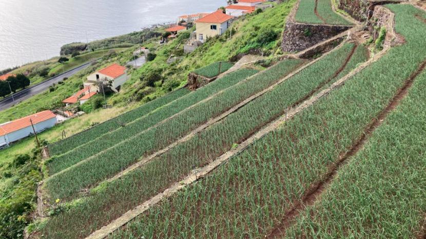 Mais 790 mil euros pagos a 31 agricultores em fevereiro