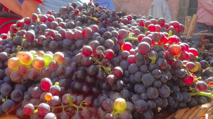 Câmara de Lobos decide apoio a viticultores