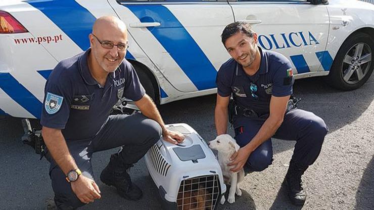 Dois agentes da PSP Madeira salvam cães bebés
