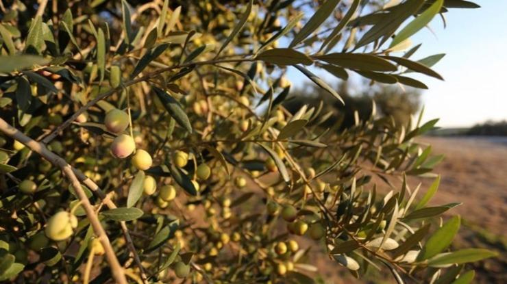 Produção de frutos e vinho beneficiada, cereais e azeite prejudicados pela seca