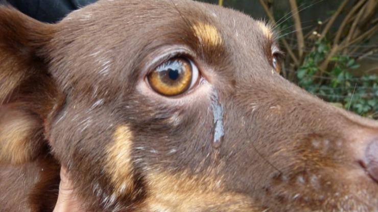 Câmara de Lobos: autarquia diz que recolha dos cães foi feita pela associação