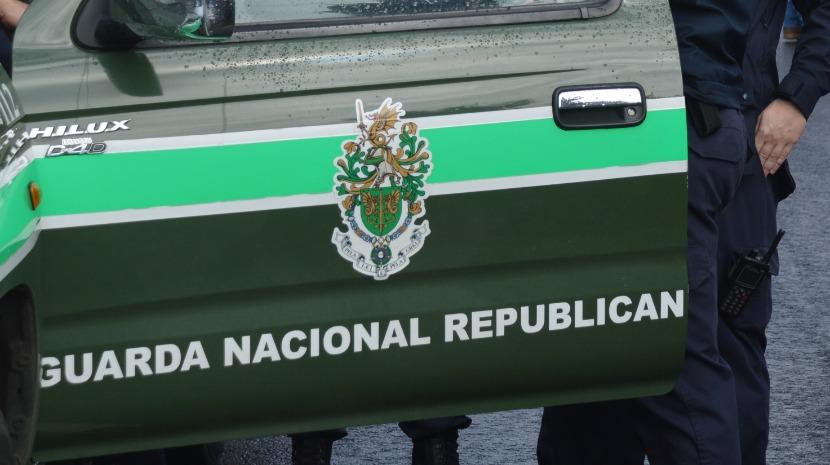 GNR salva ave rapina no Funchal