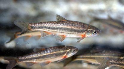 Aquário Vasco da Gama liberta espécies de peixes ameaçadas