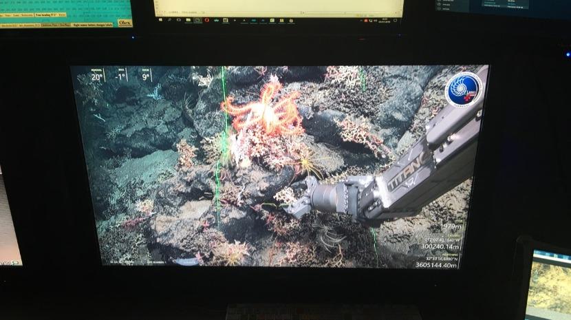 Investigadores do Observatório Oceânico da Madeira descobrem planície de corais ao largo da Ribeira Brava