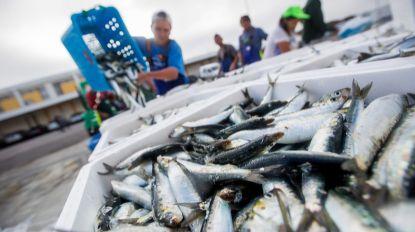 Pesca da sardinha deve ser suspensa em 2019