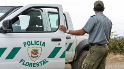 Polícia Florestal identifica autor de fogueira em Machico