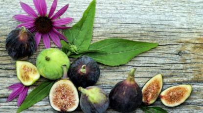 Festa do Figo e do Tabaibo adiada para a segunda semana de setembro