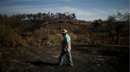 Incêndios: Governo abre candidaturas para apoios de 5ME aos agricultores