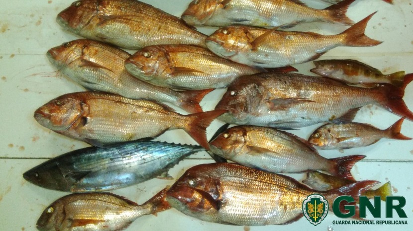 GNR apreende  129 quilos de pescado