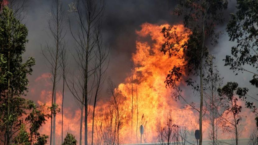 Incêndios: Quase duas dezenas de concelhos em risco máximo