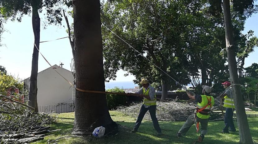 IFCN realiza poda de árvores em espaços verdes