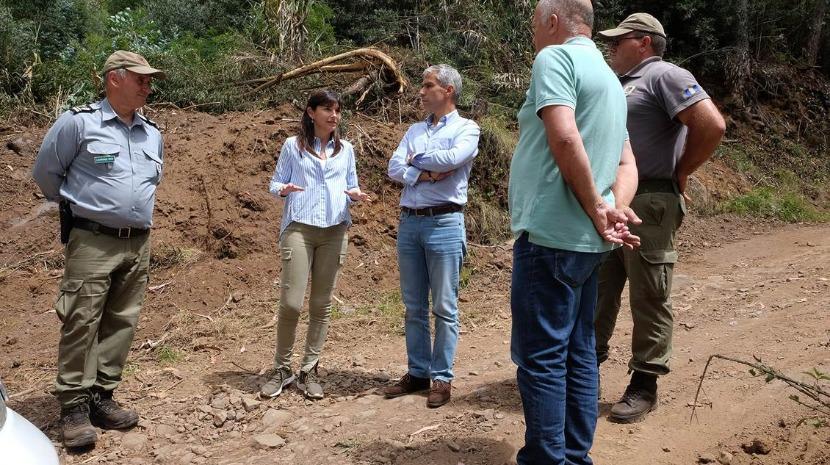 Governo Regional prende limpar 180 quilómetros de caminhos florestais até ao fim do ano