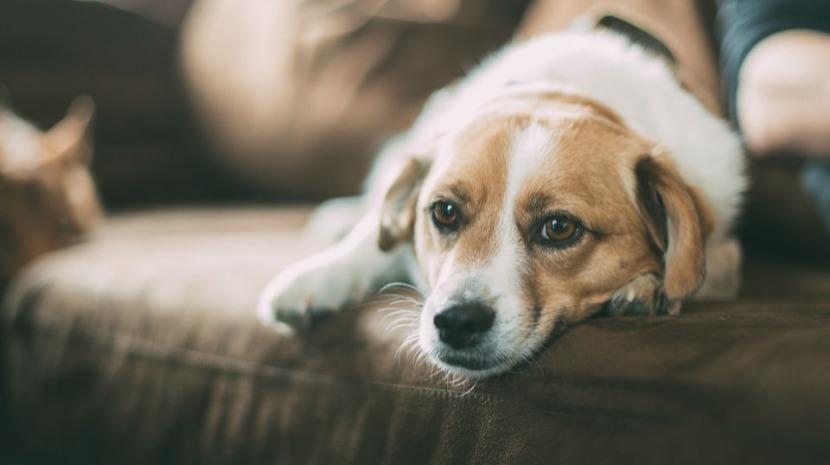Madeira quer criar provedor do animal