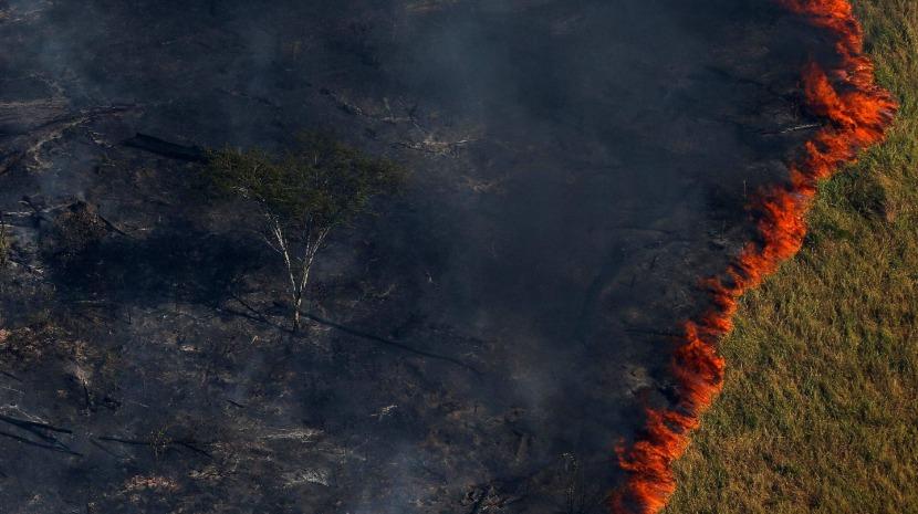 Amazónia: Líderes católicos da América Latina manifestam preocupação