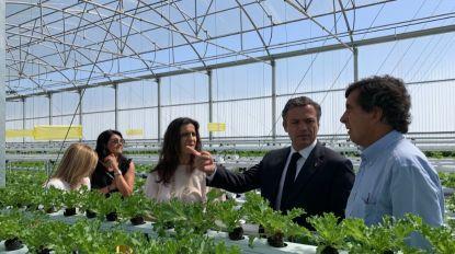 """Pedro Calado diz que incentivos ao investimento """"dinamizam a economia e criam emprego"""""""