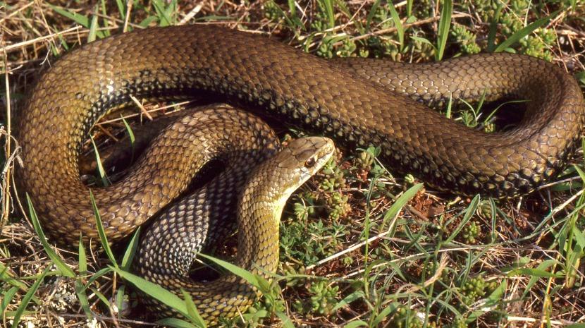 Cobra encontrada na zona de embarque do Aeroporto Humberto Delgado