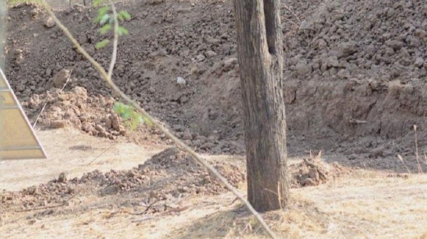 Onde está o leopardo? Este é o novo desafio viral na internet