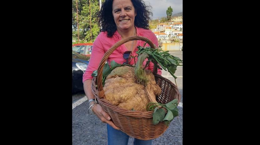 Mulher colhe batata com 20 kg no Estreito de Câmara de Lobos