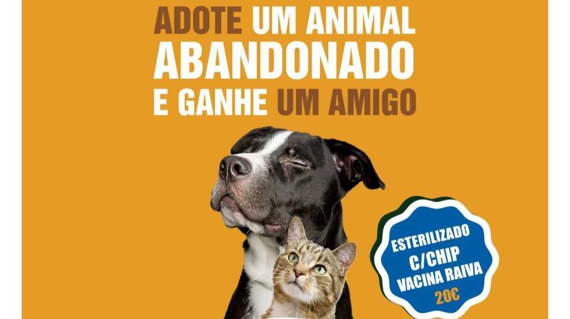 Aldeia Natal acolhe campanha de adoção de animais