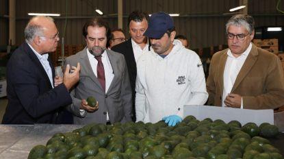 Governo Regional apela à produção de peras abacates e anonas