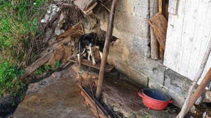 Centenas de cães vivem acorrentados e malnutridos no sítio do Castelejo