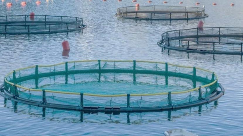 Investigadores avaliam efeitos das nanopartículas em aquacultura
