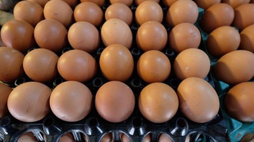 ASAE apreende em Pombal 50 mil ovos no valor de seis mil euros