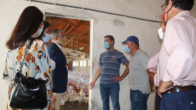 Humberto Vasconcelos visita exploração pecuária na Camacha