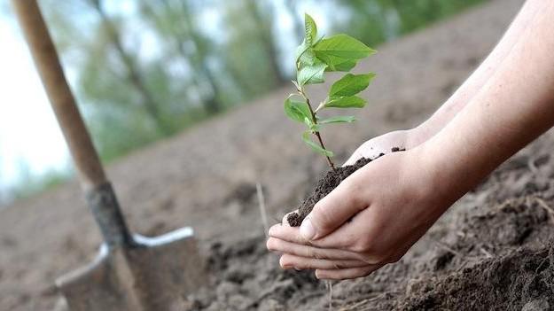 Plantação de 5 mil árvores no Chão das Galinhas com a presença de Luís Represas